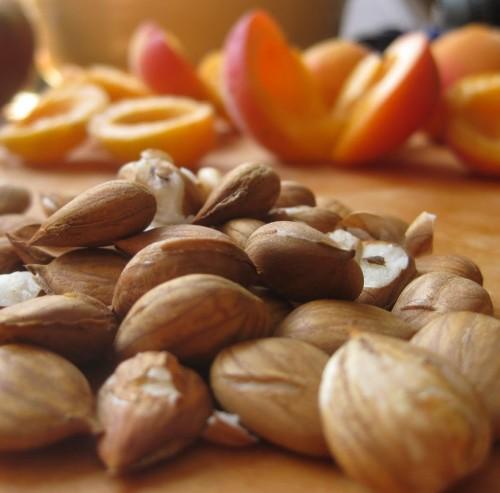 apricot_kernel